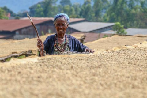 Ethiopia-Origin-wholesale-roast-2
